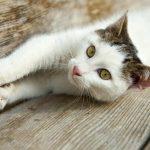 Fotoshooting Haustiere Katzen Outdoor Fotografen
