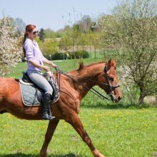 Fotshooting Pferde Outdoor Fotografen