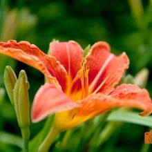 Fotoshooting Blüten Outdoor Fotografen