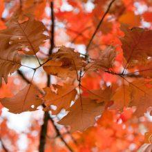 Fotoshooting Blätter Outdoor Fotografen